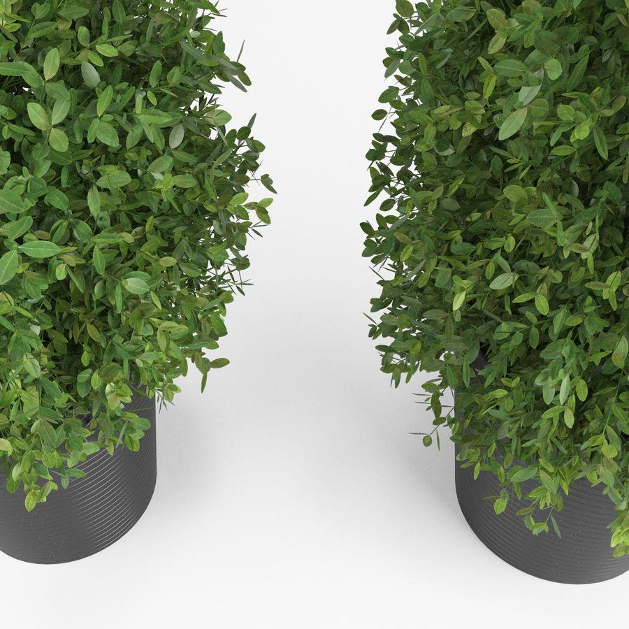 Plantas para interior y exterior royalty-free modelo 3d - Preview no. 6