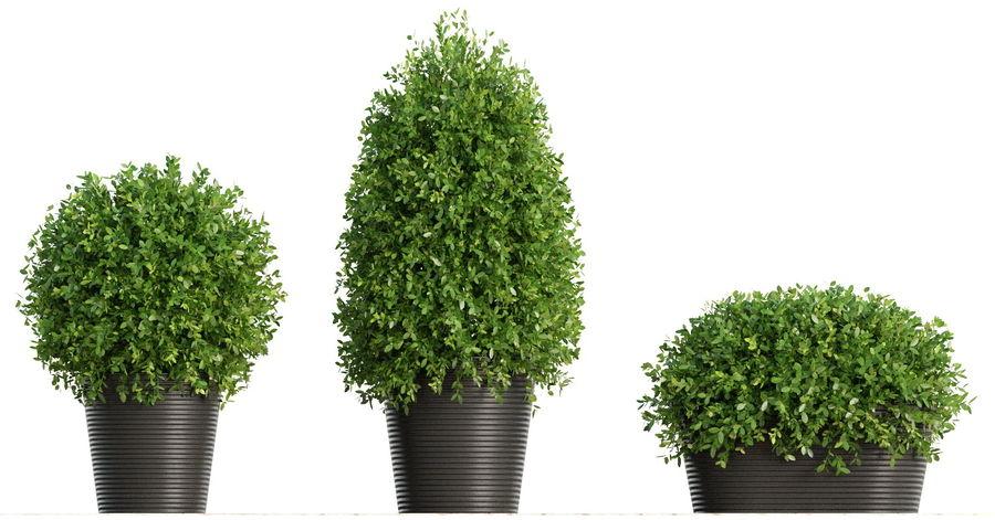 Plantas para interior y exterior royalty-free modelo 3d - Preview no. 7
