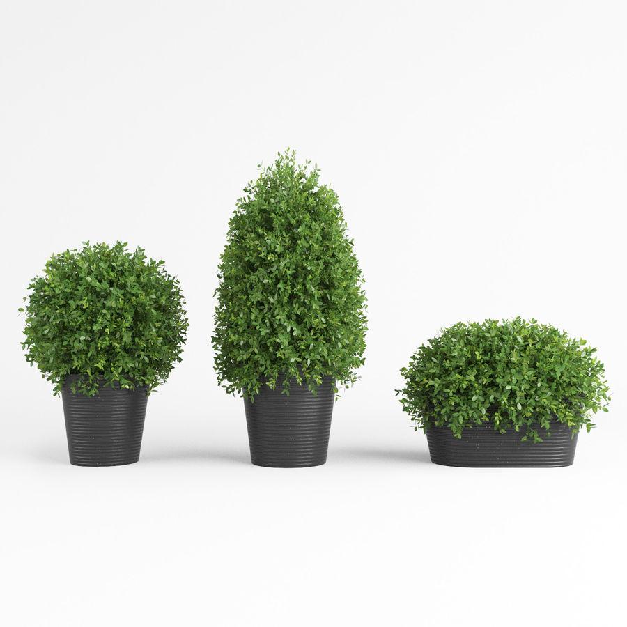 Plantas para interior y exterior royalty-free modelo 3d - Preview no. 9