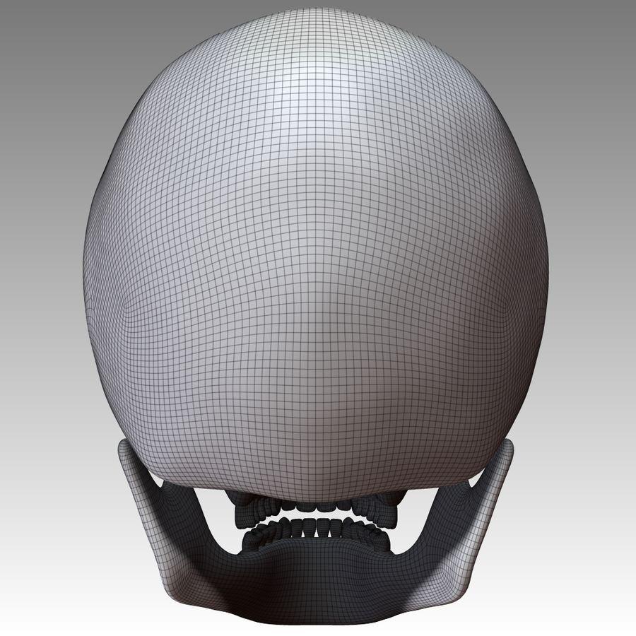 Kafatası royalty-free 3d model - Preview no. 9