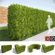 Thuja Tall Hedges 3d model