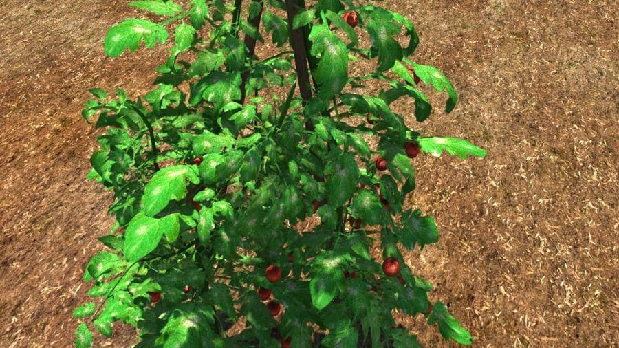 Planta de tomate royalty-free 3d model - Preview no. 1