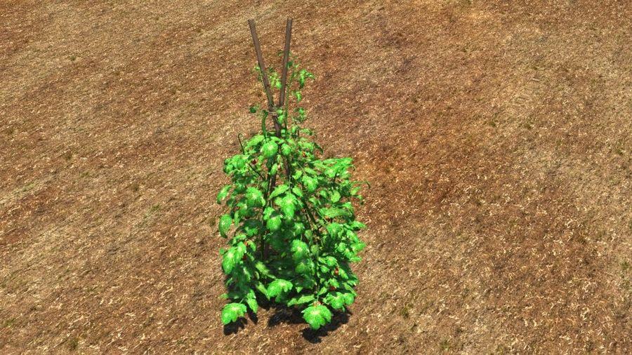 Planta de tomate royalty-free 3d model - Preview no. 2