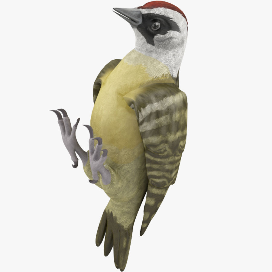 Woodpecker Toy 3 royalty-free 3d model - Preview no. 3