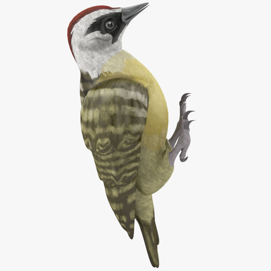 Woodpecker Toy 3 royalty-free 3d model - Preview no. 5