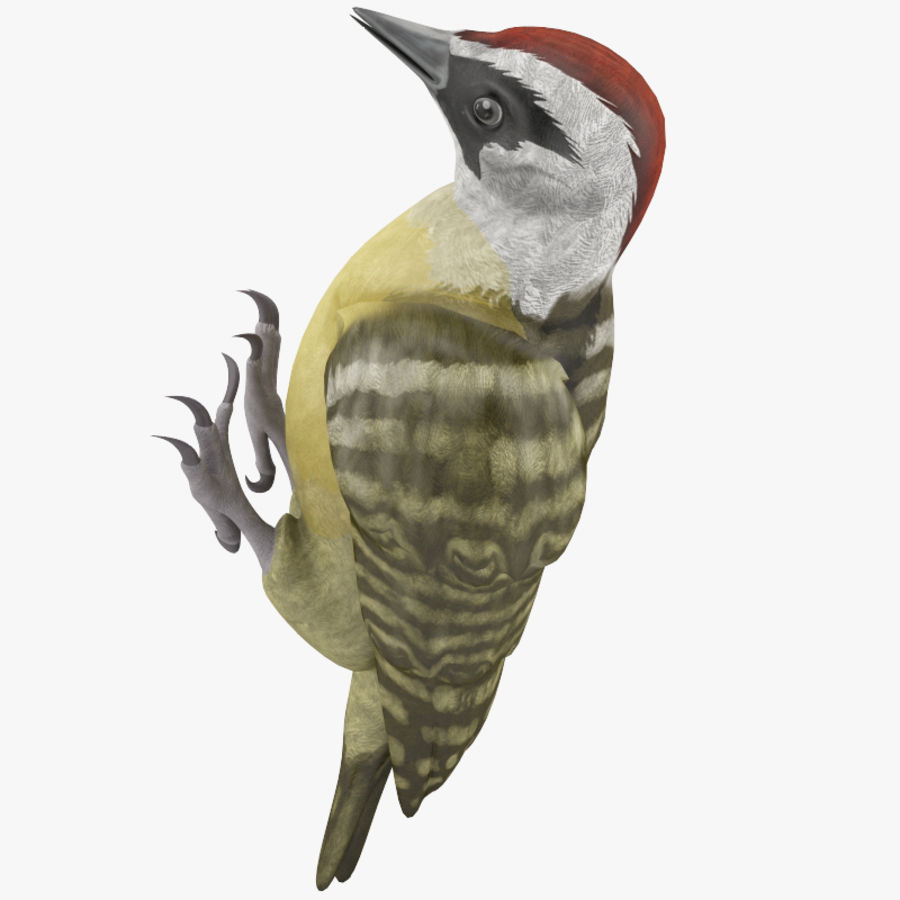 Woodpecker Toy 3 royalty-free 3d model - Preview no. 2