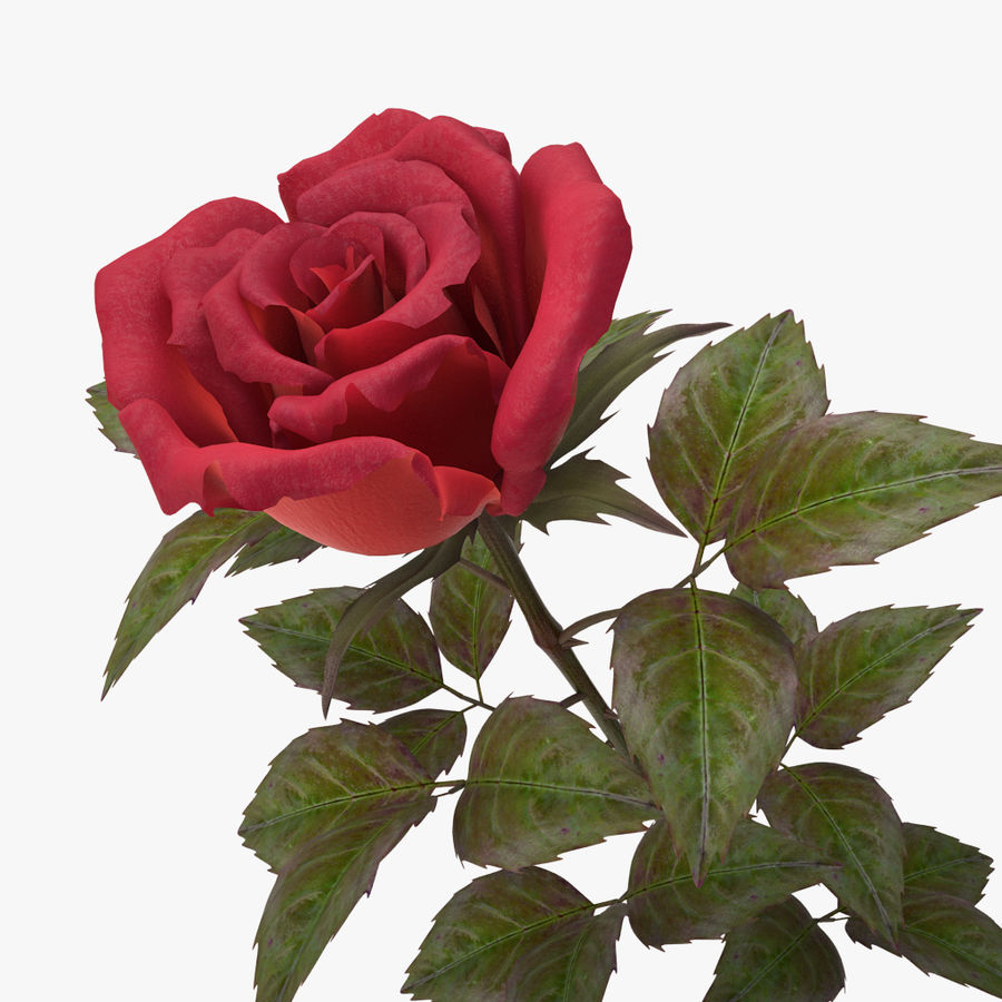 rose red_v_2 royalty-free 3d model - Preview no. 5