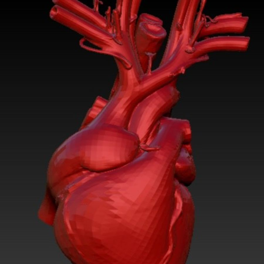 Anatomical heart 3D Model $10 - .ztl .stl .obj - Free3D
