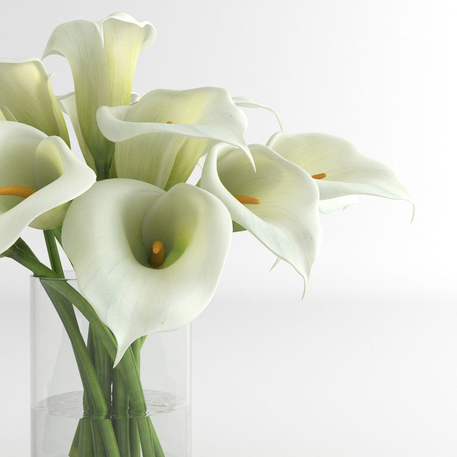 Calla Lily blomma glas vas 01 royalty-free 3d model - Preview no. 7