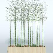 Outdoor Plant 9 3d model