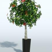 Outdoor Plant 11 3d model