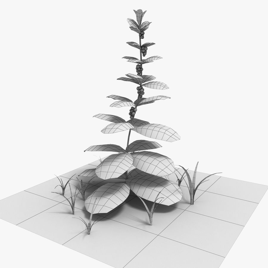 Plante royalty-free 3d model - Preview no. 2