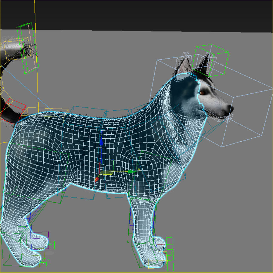 Siberian Husky rigged royalty-free 3d model - Preview no. 11
