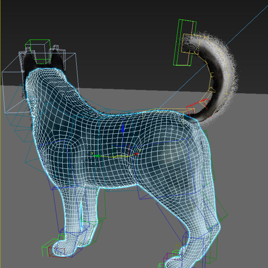 Siberian Husky rigged royalty-free 3d model - Preview no. 12