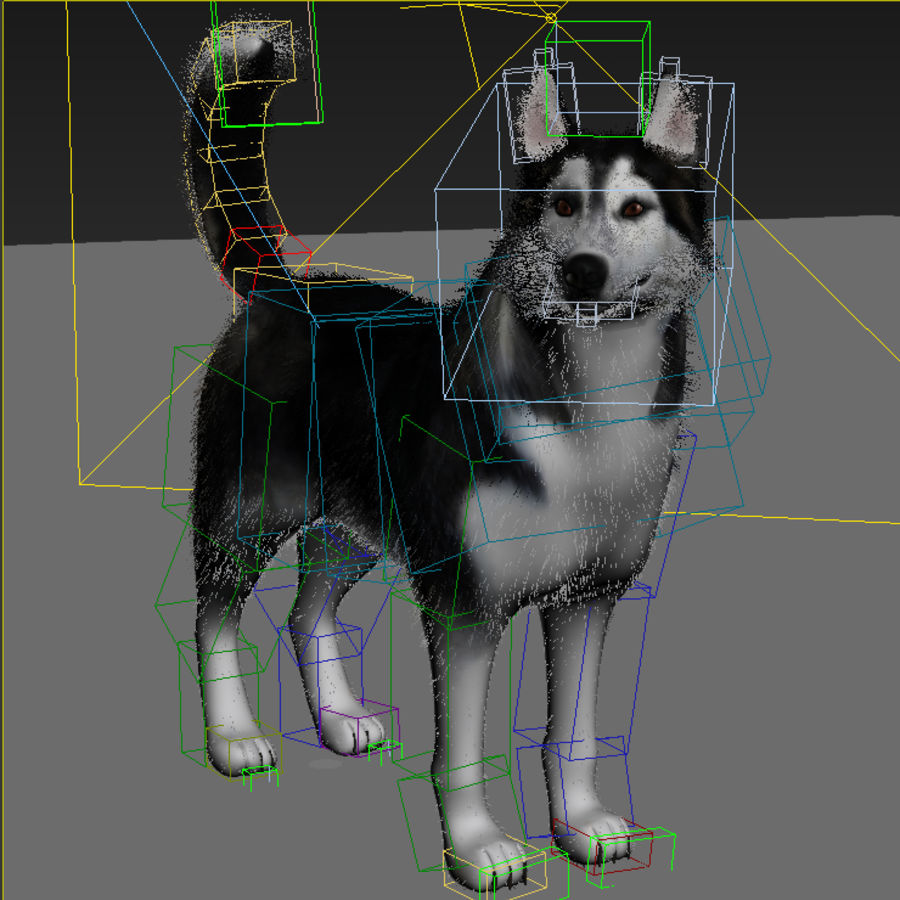 Siberian Husky rigged royalty-free 3d model - Preview no. 10