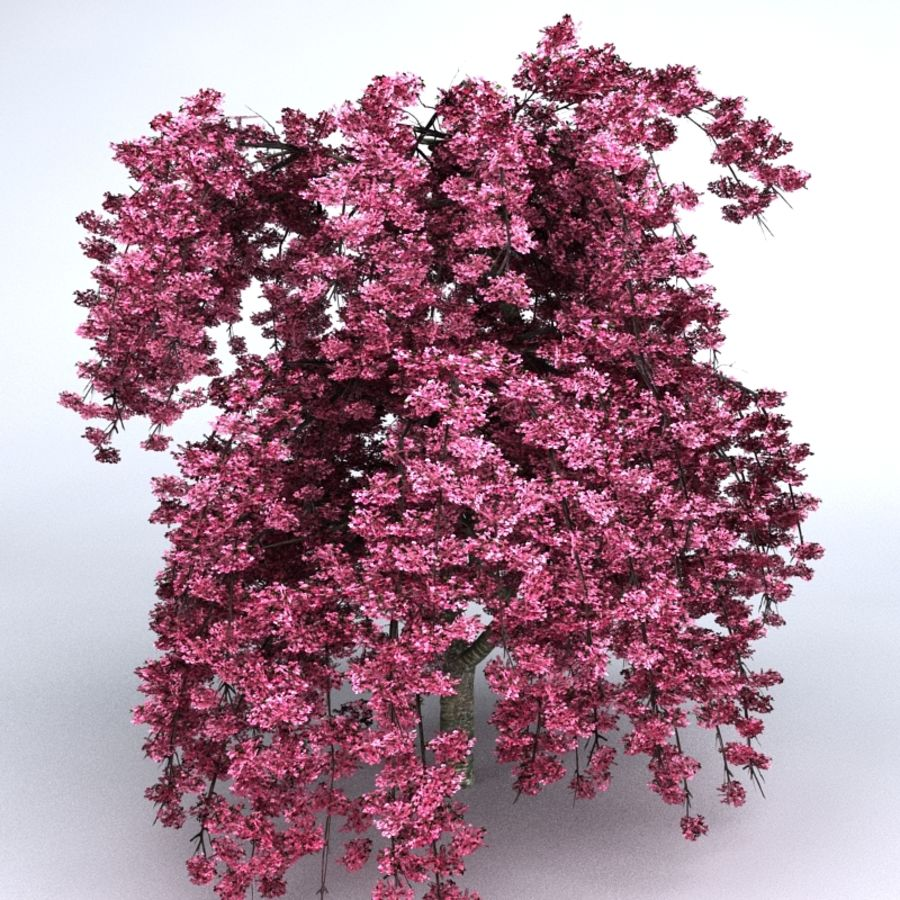 Cherry Tree royalty-free 3d model - Preview no. 4