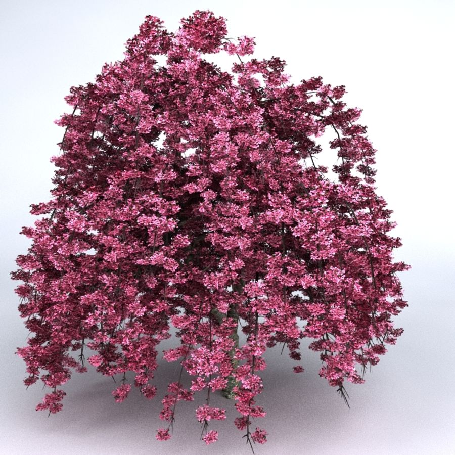 Cherry Tree royalty-free 3d model - Preview no. 3