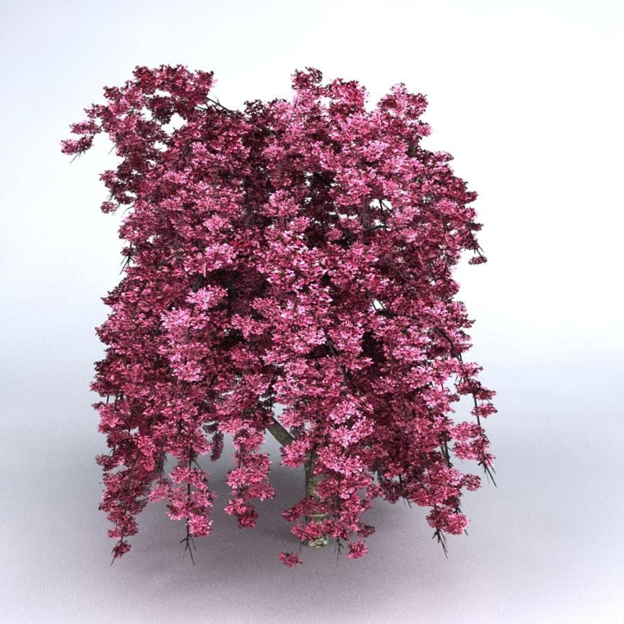 Cherry Tree royalty-free 3d model - Preview no. 2