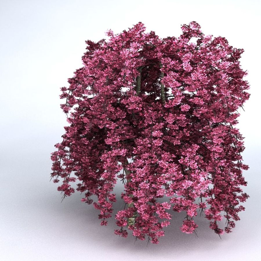 Cherry Tree royalty-free 3d model - Preview no. 6