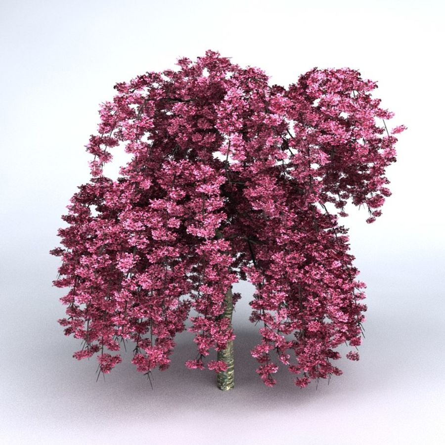 Cherry Tree royalty-free 3d model - Preview no. 1