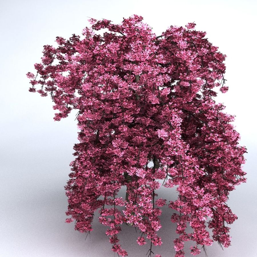 Cherry Tree royalty-free 3d model - Preview no. 5