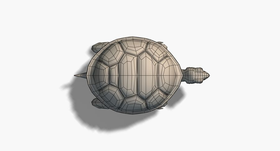 Cartoon Turtle royalty-free 3d model - Preview no. 11