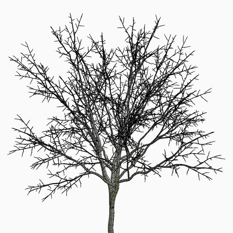 Árvore # 3 royalty-free 3d model - Preview no. 7
