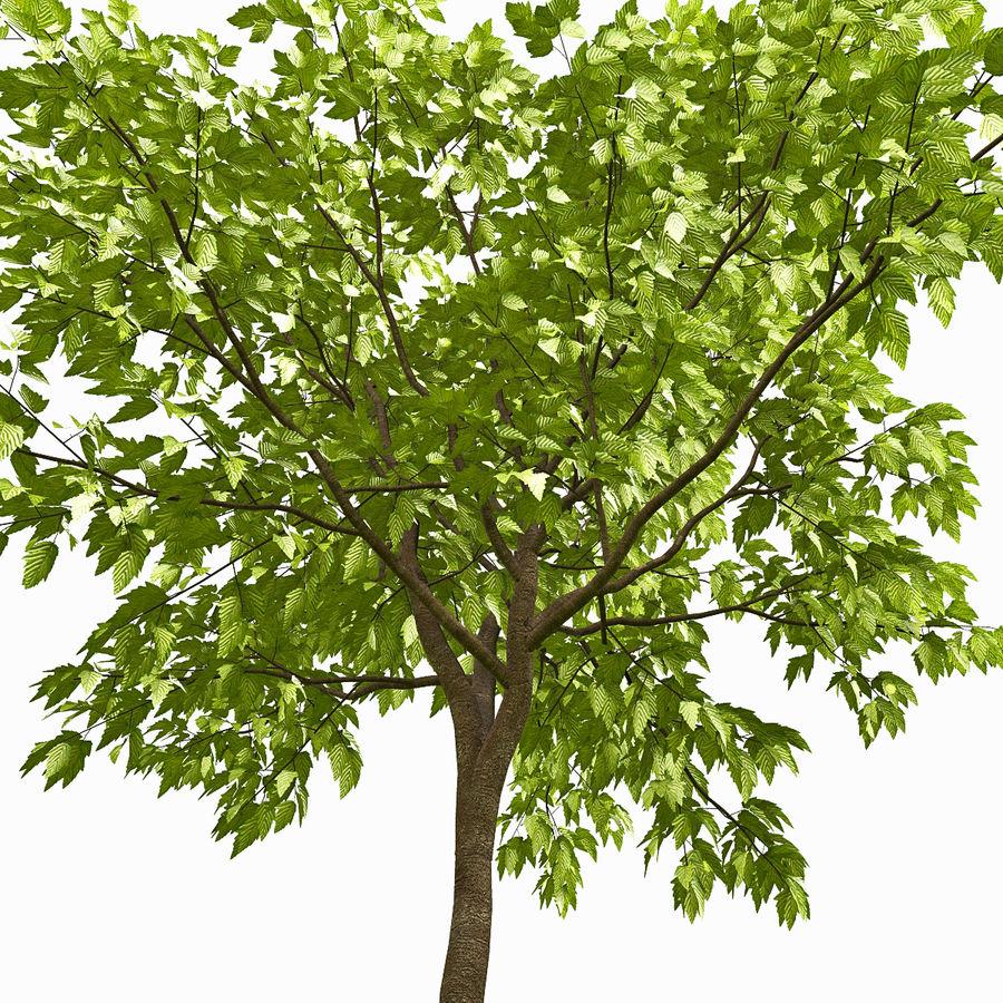 Árvore # 3 royalty-free 3d model - Preview no. 2