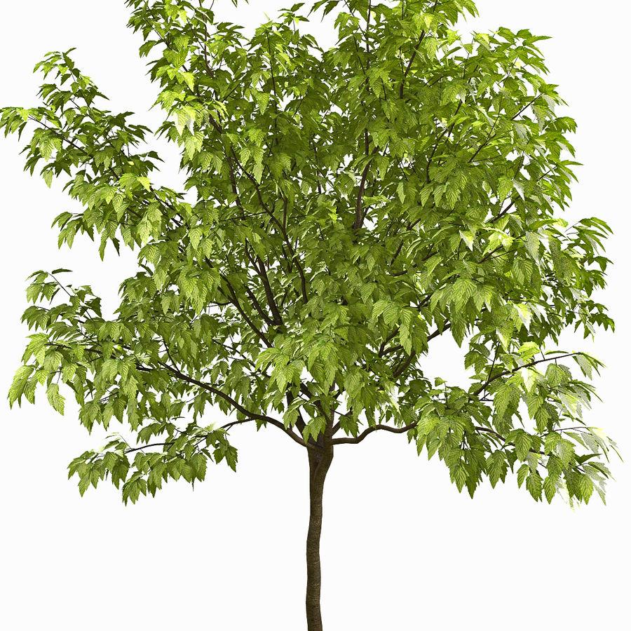 Árvore # 3 royalty-free 3d model - Preview no. 3