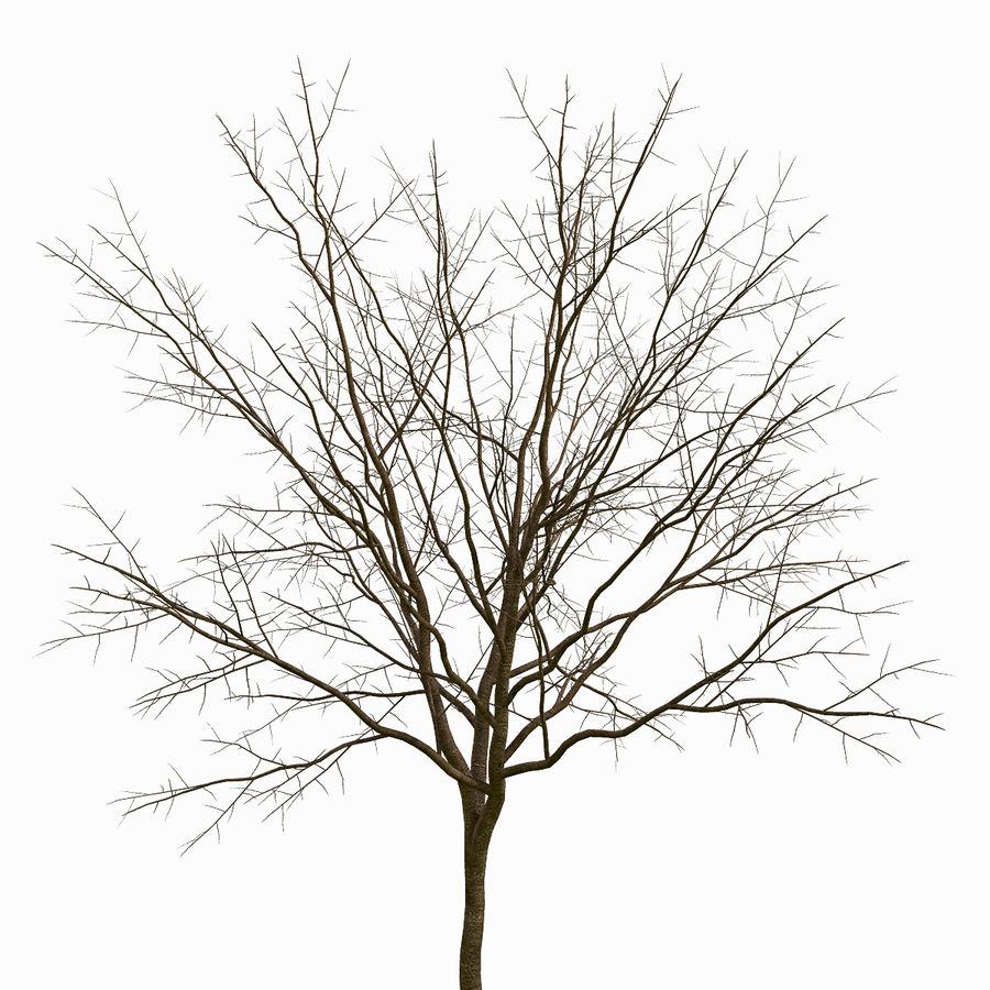 Árvore # 3 royalty-free 3d model - Preview no. 5