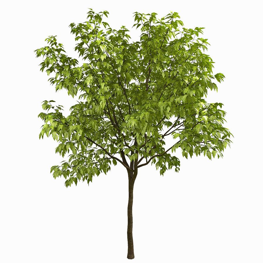 Árvore # 3 royalty-free 3d model - Preview no. 1