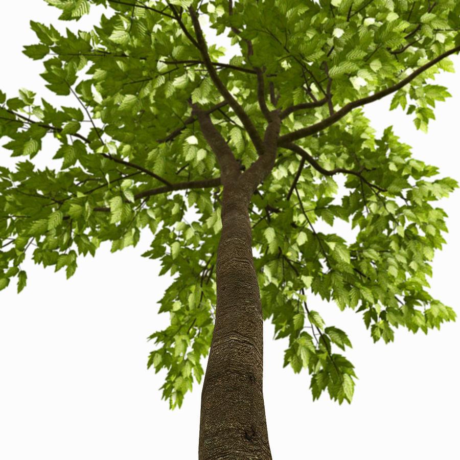 Árvore # 3 royalty-free 3d model - Preview no. 4