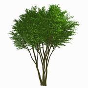 Tree #14 3d model