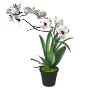 White Orchid Flower 3d model