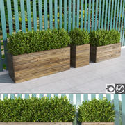 Hedges in wooden planters 3d model