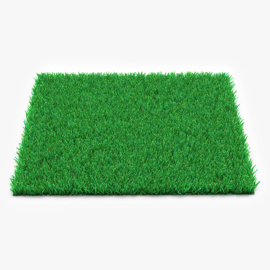 Kentucky Bluegrass Çimen royalty-free 3d model - Preview no. 1