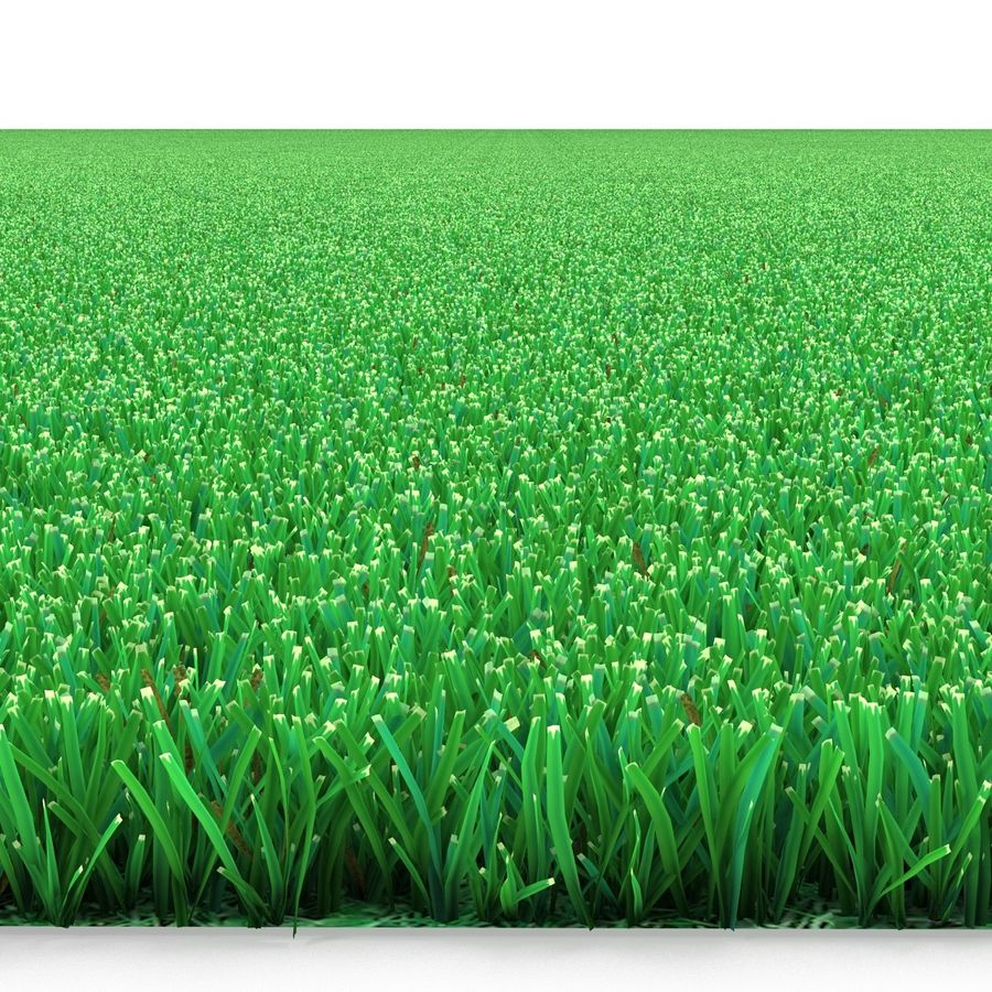 Kentucky Bluegrass Grass royalty-free 3d model - Preview no. 9
