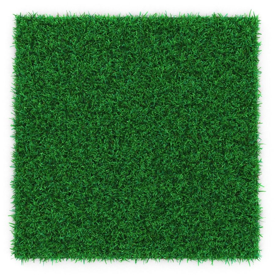 Kentucky Bluegrass Çimen royalty-free 3d model - Preview no. 4