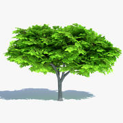 Cartoon Elm Tree 3d model