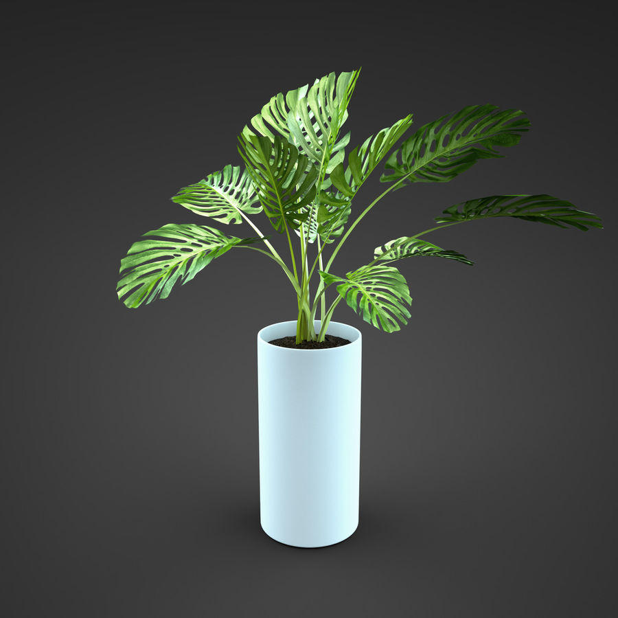 home plant Monstera royalty-free 3d model - Preview no. 2