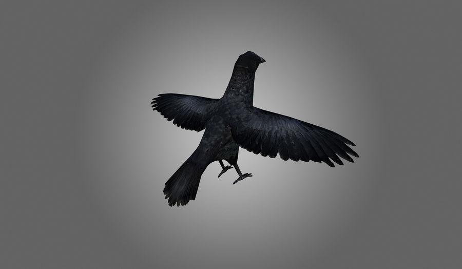 Crow Low-Poly 3D Model $12 -  obj  blend  3ds - Free3D