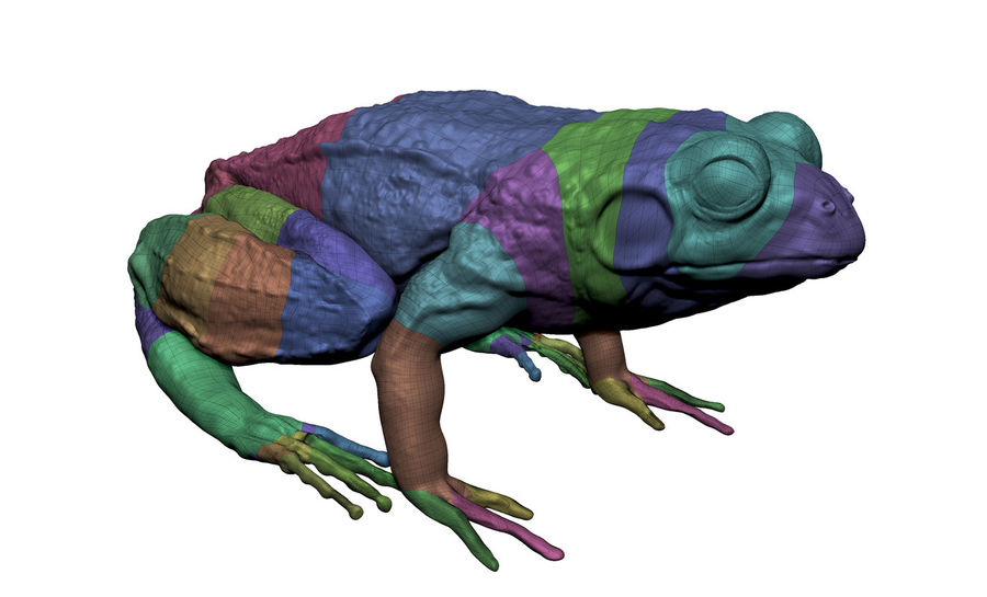 Frog royalty-free 3d model - Preview no. 6