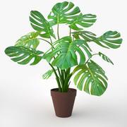 monstera plant_v_2 3d model