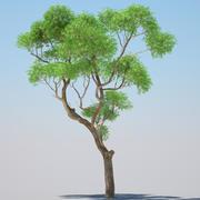 Эвкалиптовое дерево 01 3d model