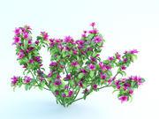 azalea japonica bush 3d model