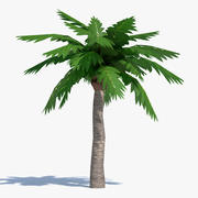 Cartoon Palm Tree 1 3d model