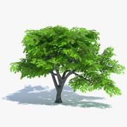 Cartoon Oak Tree 3d model