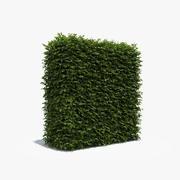 Tall Boxwood Hedge 3d model