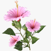 hibscus pink_branch 3d model