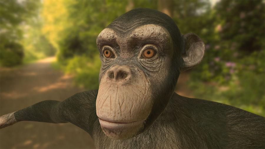 Chimpanzee royalty-free 3d model - Preview no. 1